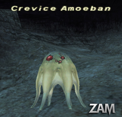 Crevice Amoeban Picture