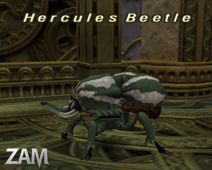 Hercules Beetle (Nyzul) Picture