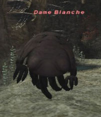 Dame Blanche Picture