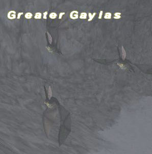 Greater Gaylas Picture