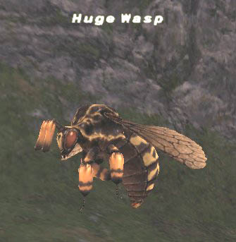 Huge Wasp Picture