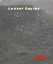Lesser Gaylas Picture