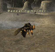 Maneating Hornet Picture