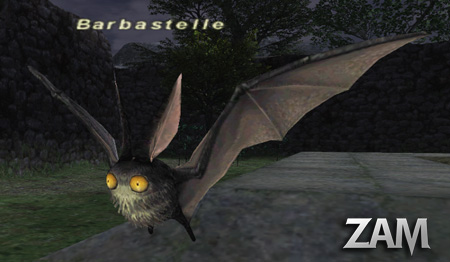 Barbastelle Picture