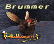 Brummer Picture