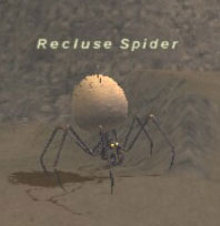 Recluse Spider Picture