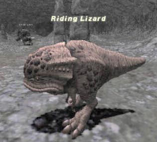 Riding Lizard Picture