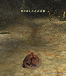 Wadi Leech (Fished) Picture
