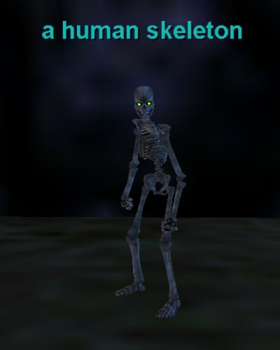 a human skeleton :: bestiary :: everquest :: zam, Skeleton